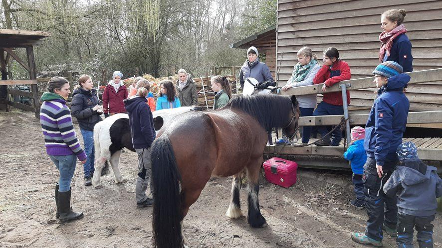 Ponyschule der Tierversorger