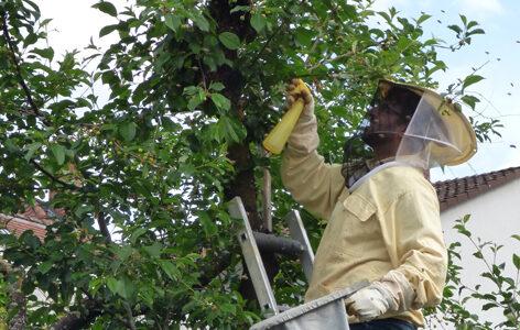 Bienenschwarm wird mit Wasser benebelt