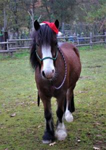 Monty mit Weihnachtsmütze