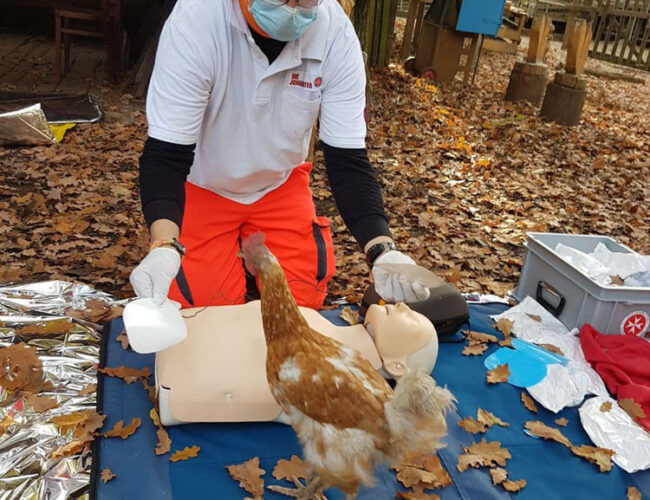 Huhn lernt Reanimation