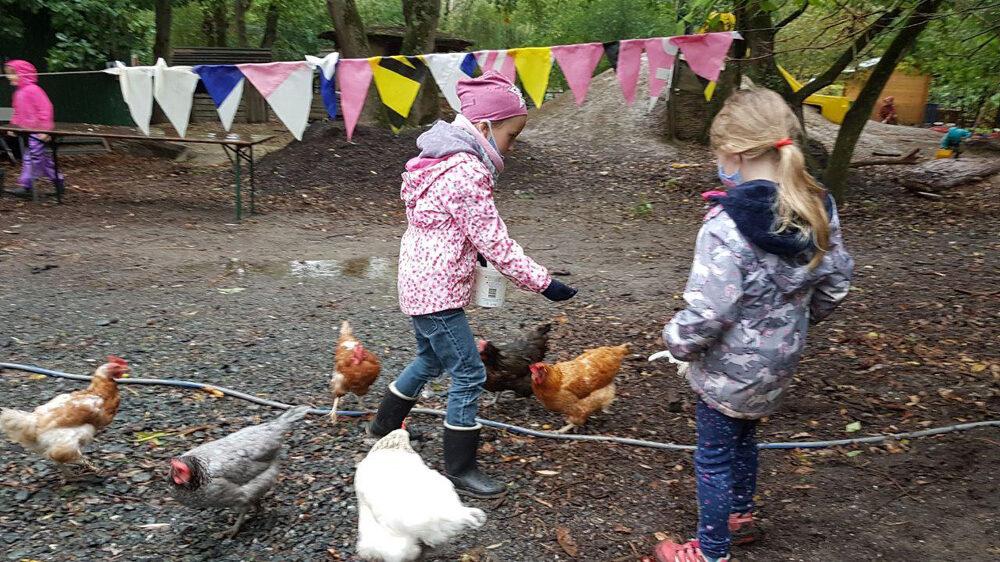 Kinder füttern die Hühner