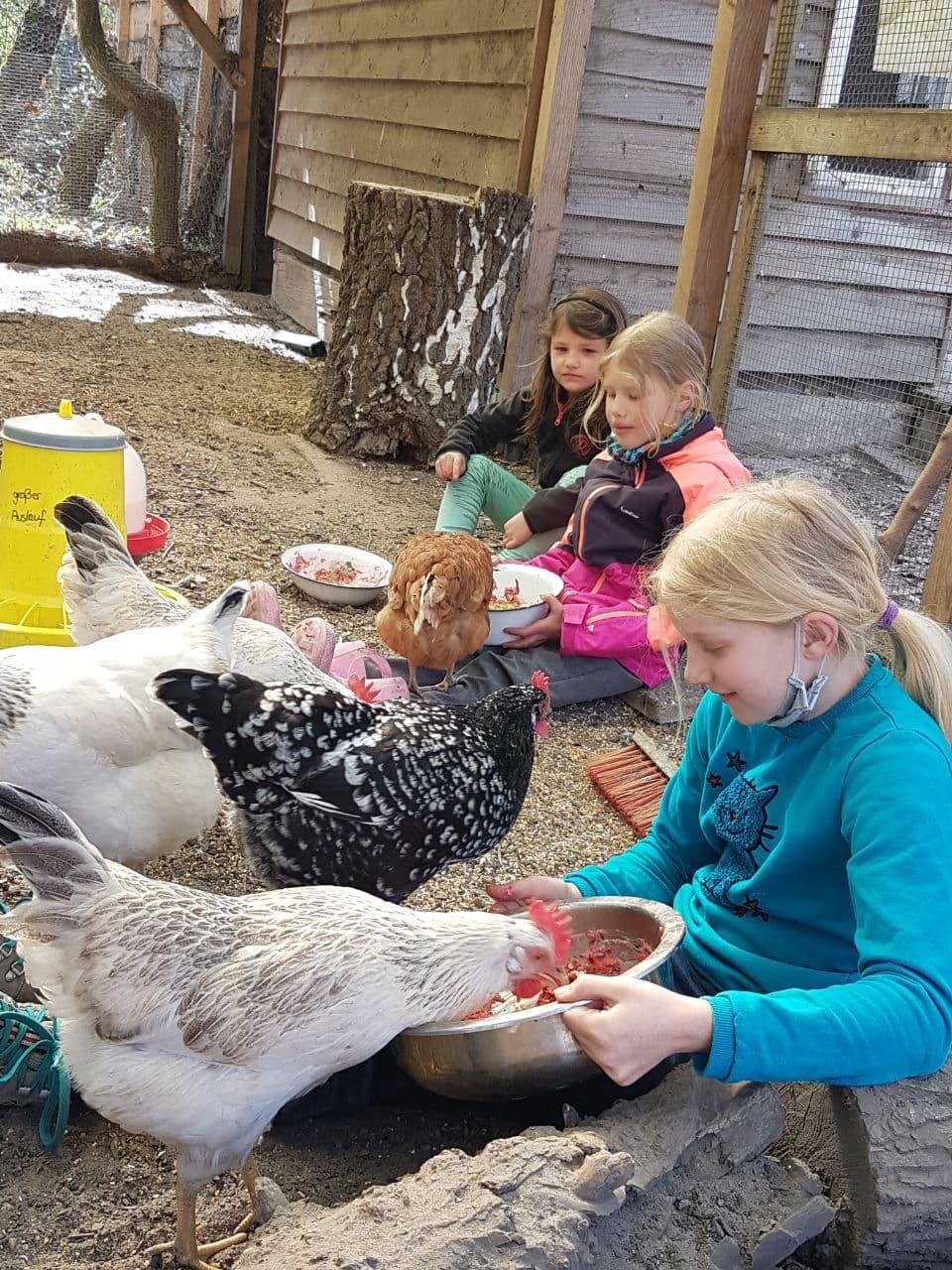 Persönliche Hühnerfütterung