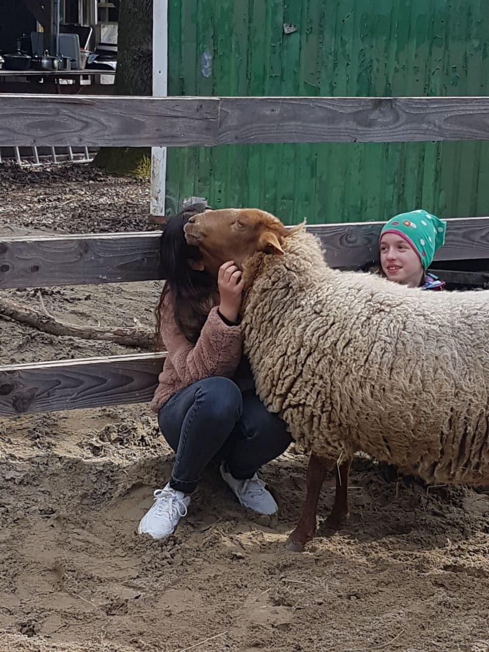 Schafsauszeit
