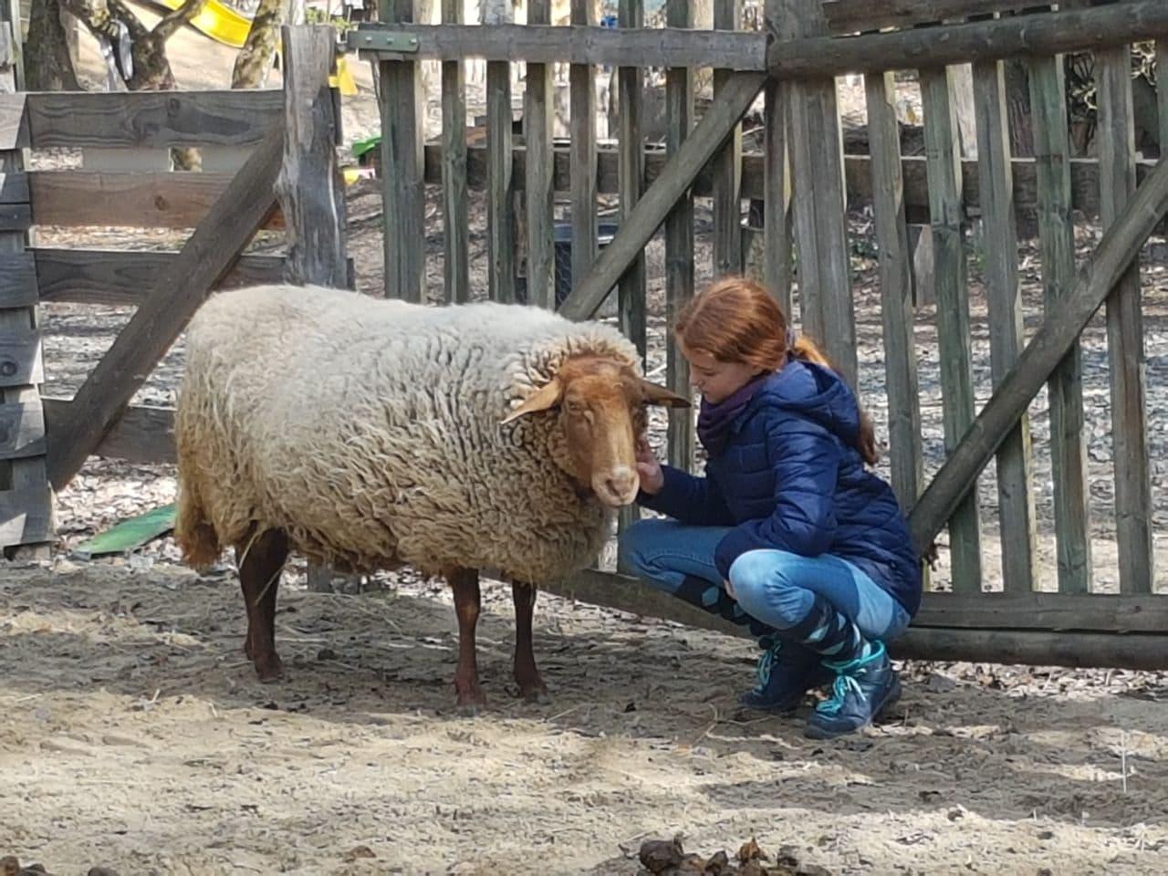 ... oder mit einem Schaf.