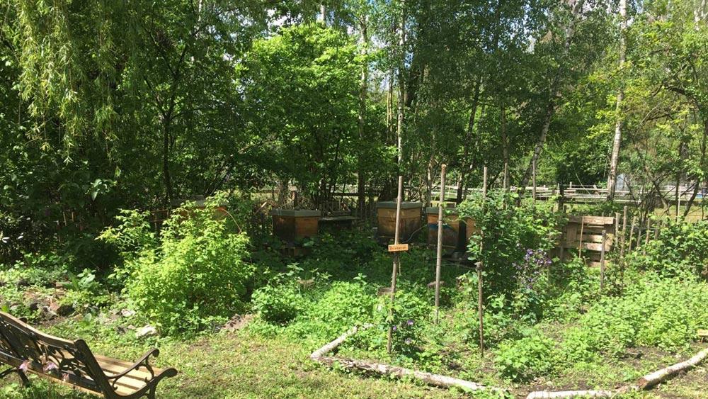 Blick in den Farmgarten