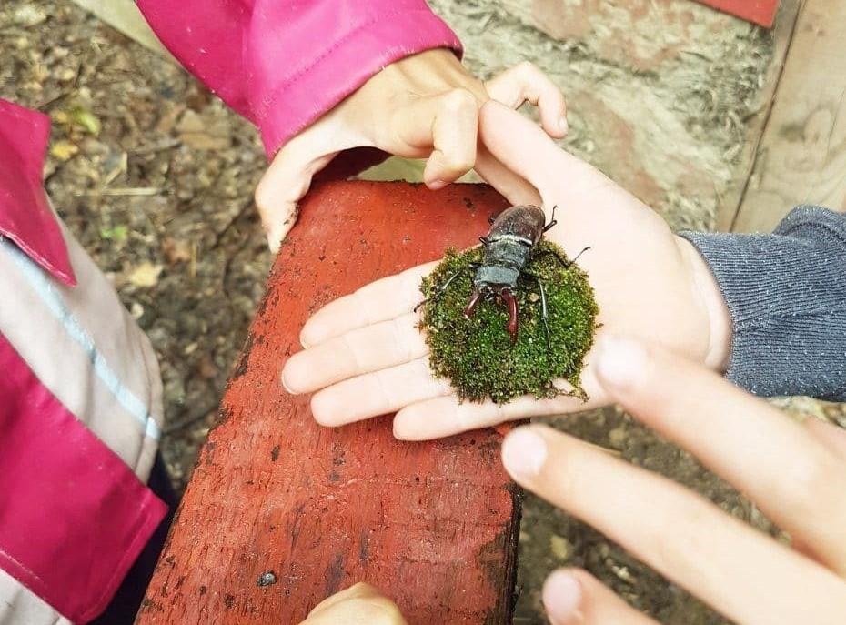 Hirschkäfer auf Kinderhänden