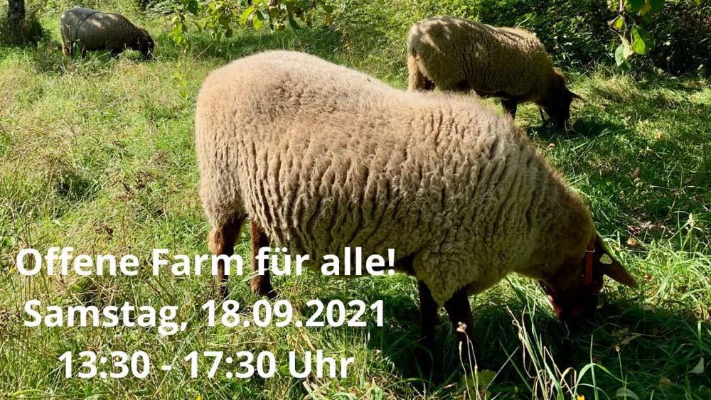 Schafe auf der Streuobstwiese